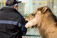 Чернобыльские верблюды